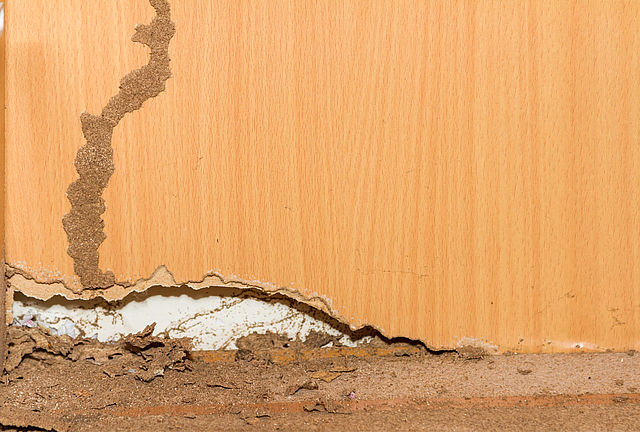 Five reasons you NEED a building and pest inspection BEFORE you buy a new home - Prestige Pest Control